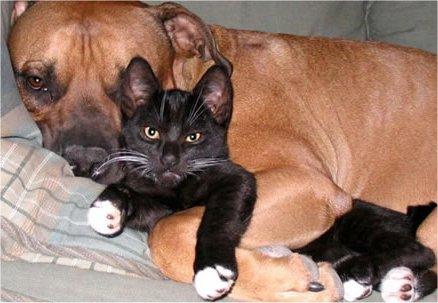 flea prevention for cat